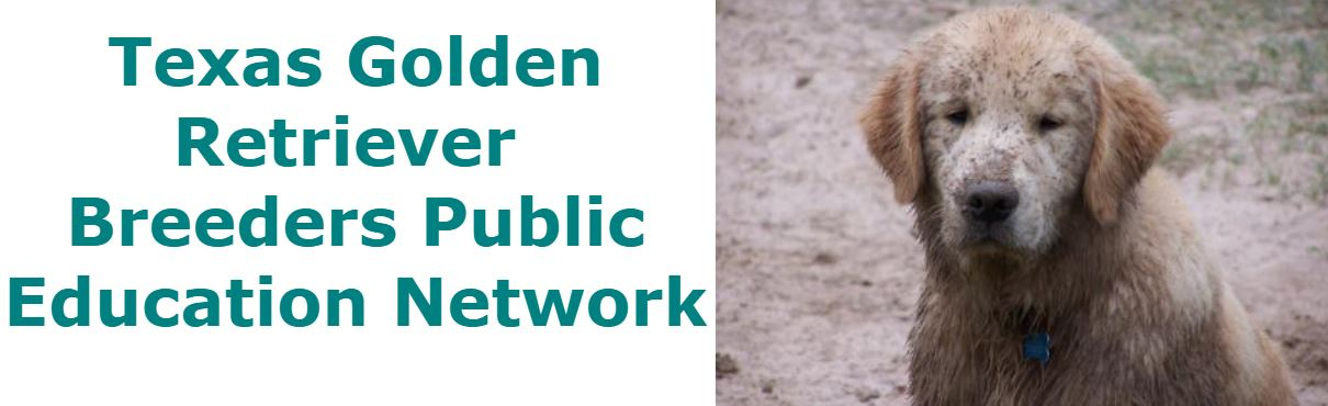 Texas Golden Retriever  Breeders Public Education Network
